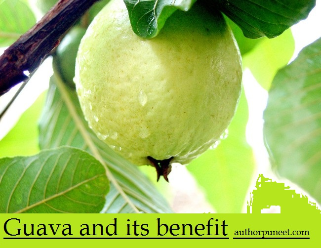health-benefits-of-a-guava-fruit